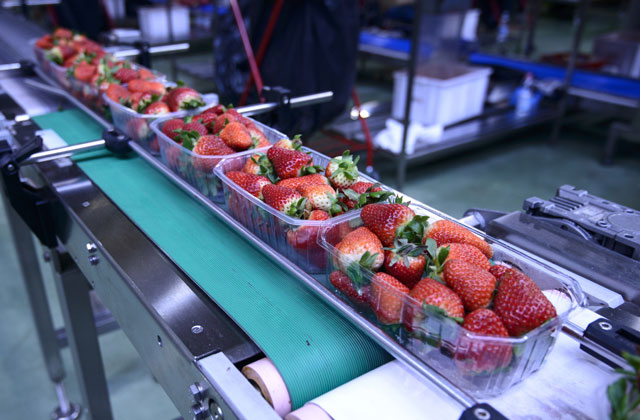 Foodprocessing-640x420
